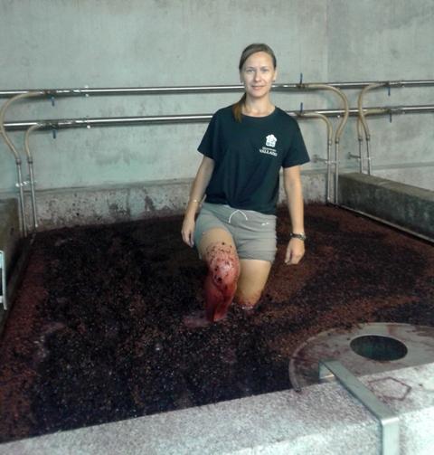 давить виноград ногами в лагаре